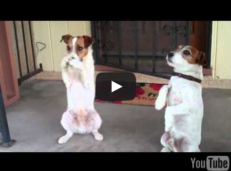 Watch Uggie And Dash As They Have So Much Fun Doing Tricks