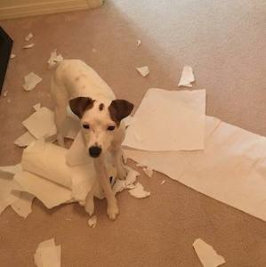 These Innocent Looking JRT's Just Got BUSTED