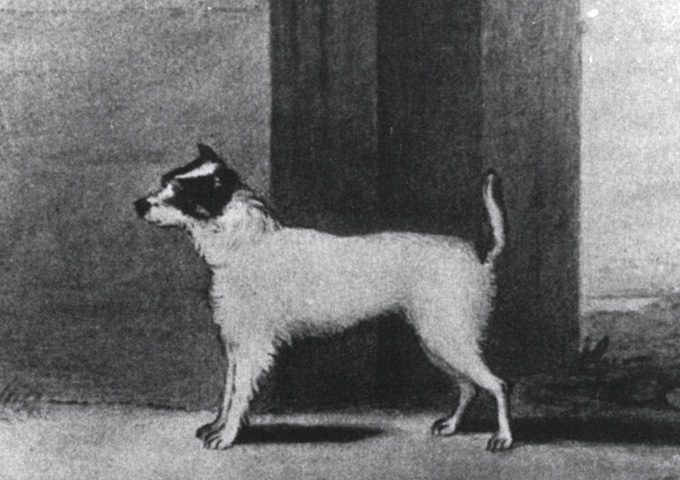 The first Jack Russell Terrier (1819)